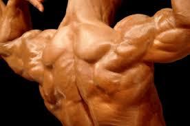 body protein