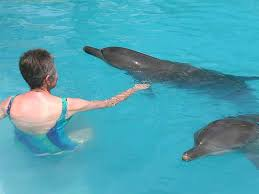 pictures of people swimming with dolphins