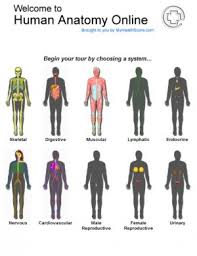 free human body pictures