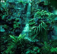 rain forests in africa