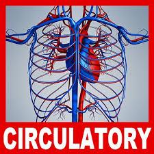circulatory system models