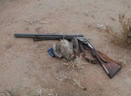 chukar quail