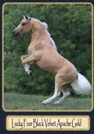 miniature horses breeding