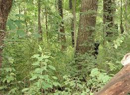 Bigfoot, ostensibly taken