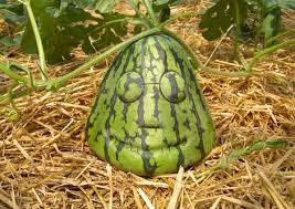 picture of watermelons