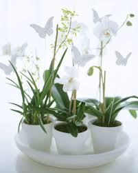 potted orchid centerpieces