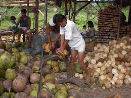 coconut industry