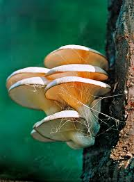 pictures of tree fungus