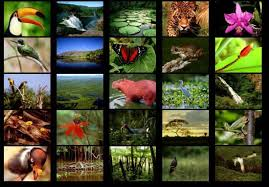 plants and animals of the rainforest