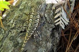 camouflage animals