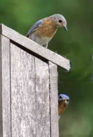 blue bird boxes