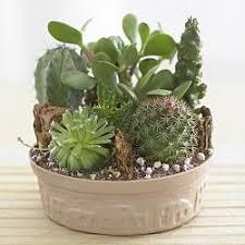 miniature cactus garden