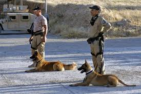 police working dogs