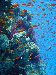 great barrier reef ecosystem