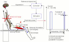 functional electrical stimulation