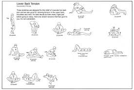 back exercise chart