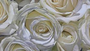 oil painting roses