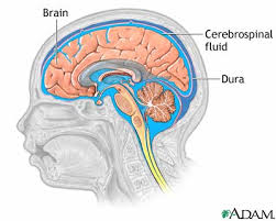 cerebrospinal fluids