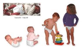 etapas de bebe