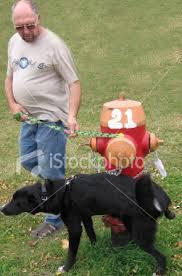 fire hydrant dog
