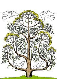 mustard seed tree