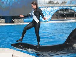 pictures of shamu the killer whale
