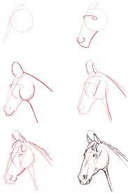 draw a horse head
