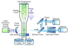 flow cytometry images