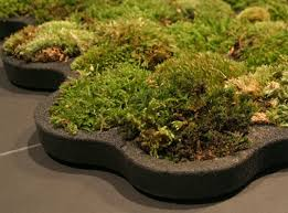 moss varieties