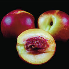 nectar fruit