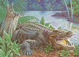 endangered alligator