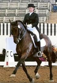 friesian sporthorses