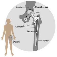 diagram of hip joint