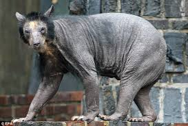 bears fur