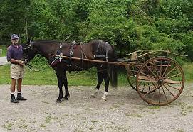 meadowbrook cart