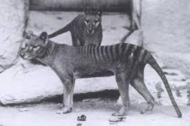 extinct of animals