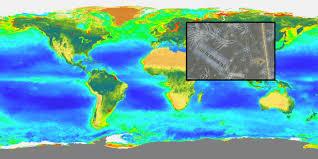 ocean biology