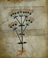 botanical illustration prints