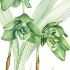 botanical watercolour
