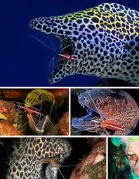electric eels fish