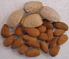 almonds tree