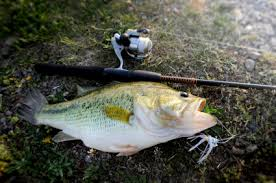 large mouth bass lures