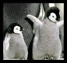 penguins babies