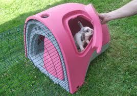 rabbit hut