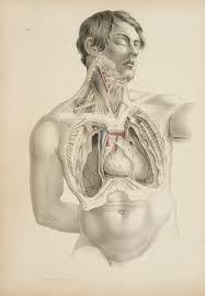 illustrations medical