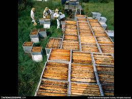 pictures of beehives