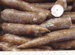 picture of yuca