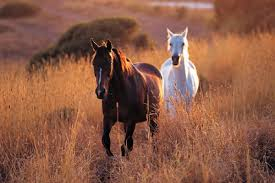 picture of a horses