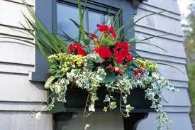 window plant boxes
