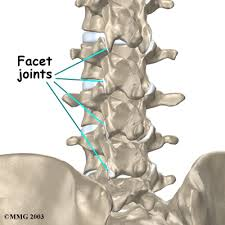 lumbar joints